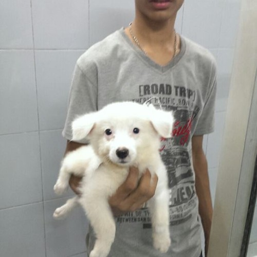 german spitz puppies for sale in ncr