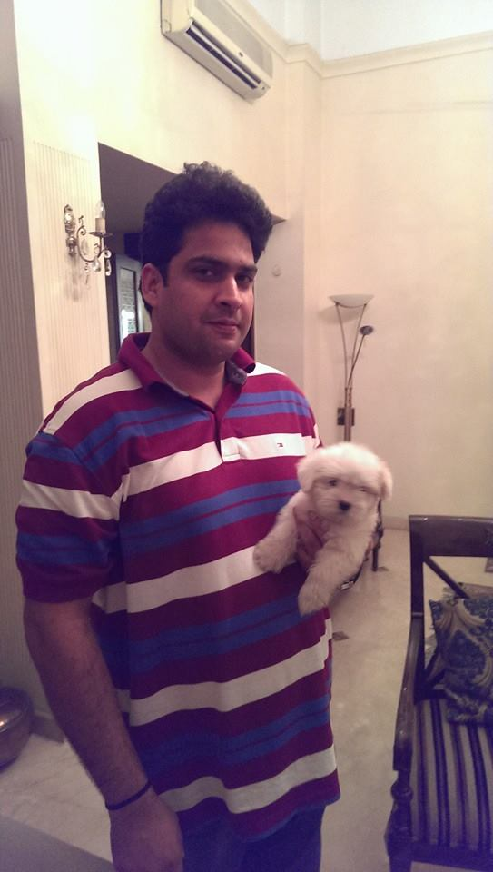 ivory coton de tulear puppies for sale in delhi ncr