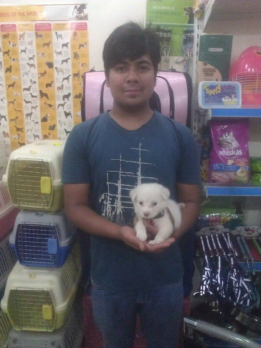 indian spitz puppies for sale in delhi ncr
