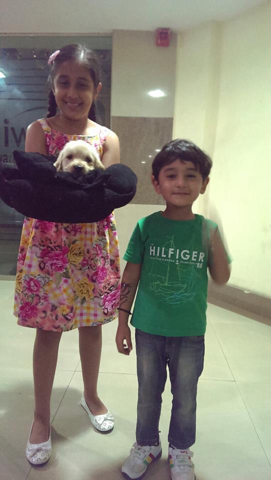 Cute golden retriever puppies for sale in delhi ncr