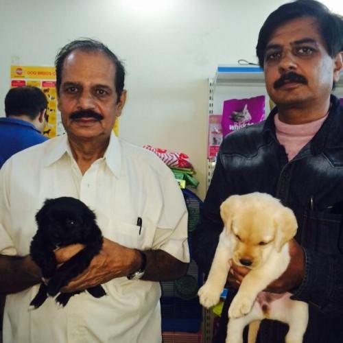 Black pekingese puppies for sale in delhi