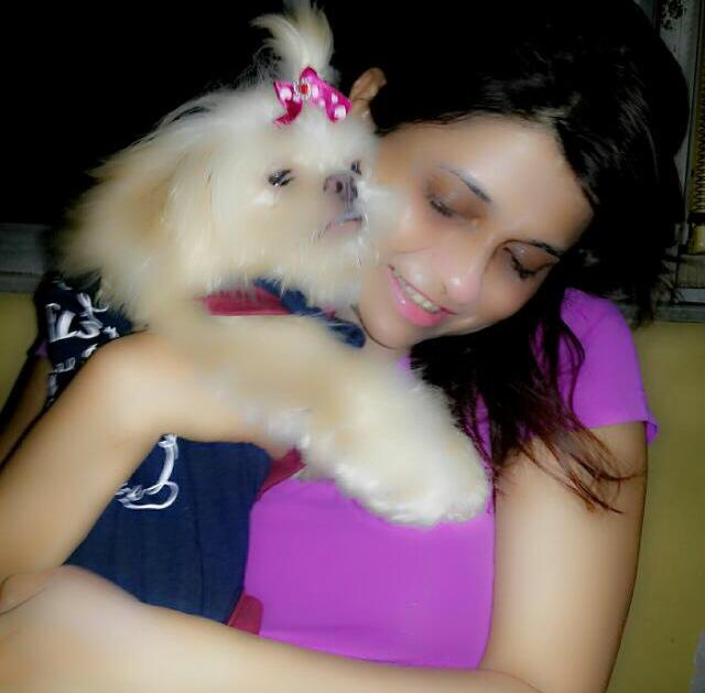 Havanese for sale in chennai