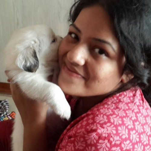 Havanese for sale in bangalore