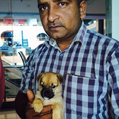 cairn terrier for sale in delhi