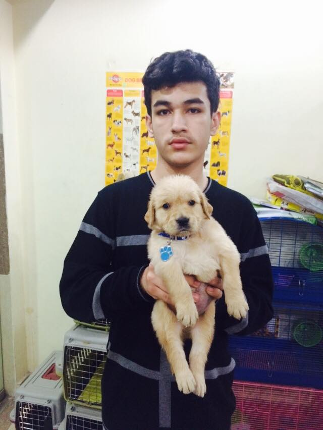 Golden Retriever for sale in delhi