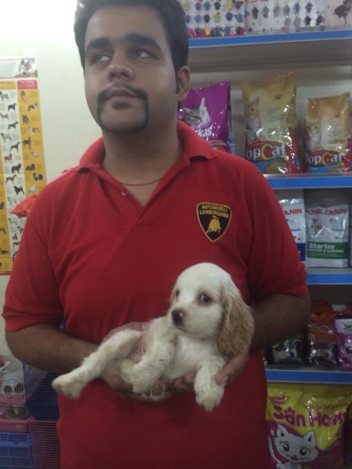 english cocker spaniel for sale in delhi