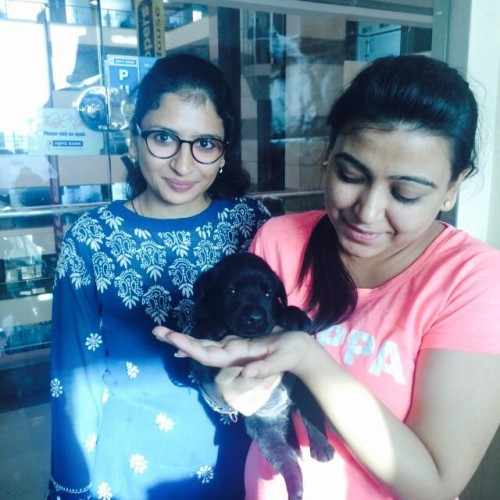 Black Larador retriever for sale in Pune