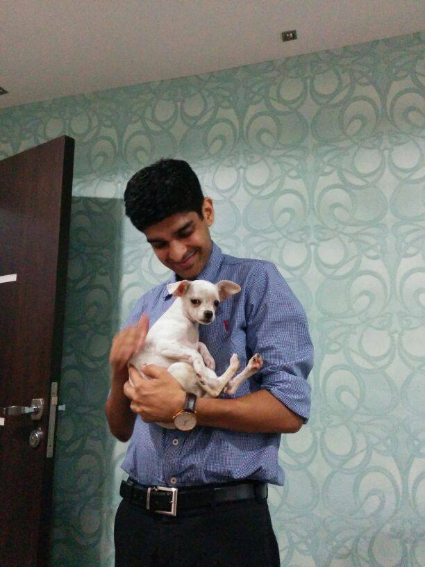 Chihuahua puppies for sale in gurgaon, Chihuahua puppies for sale in noida, Chihuahua puppies for sale in faridabad