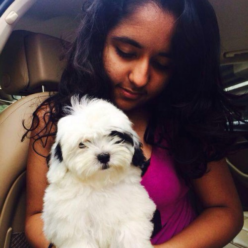 Maltipoo dog puppies for sale in gurgaon