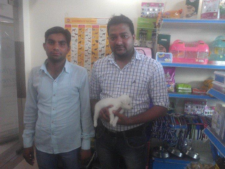 spitz puppies for sale in delhi