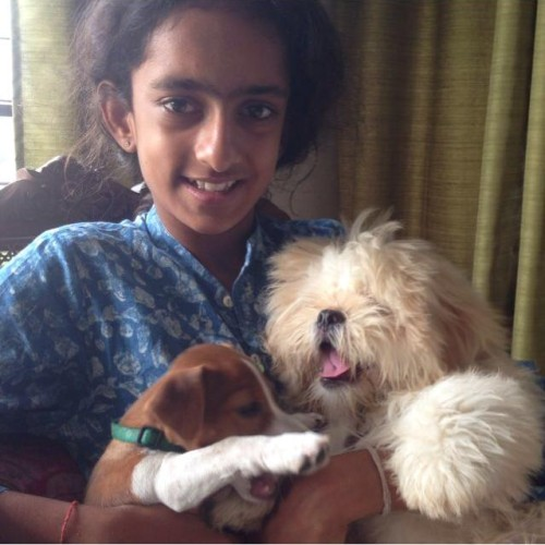 havanese dogs puppies india