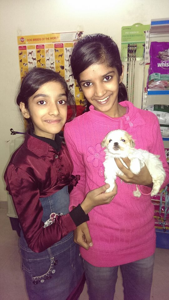 havanese breeders in india