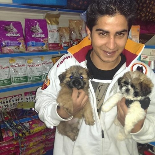 shih tzu dogs puppies for sale india