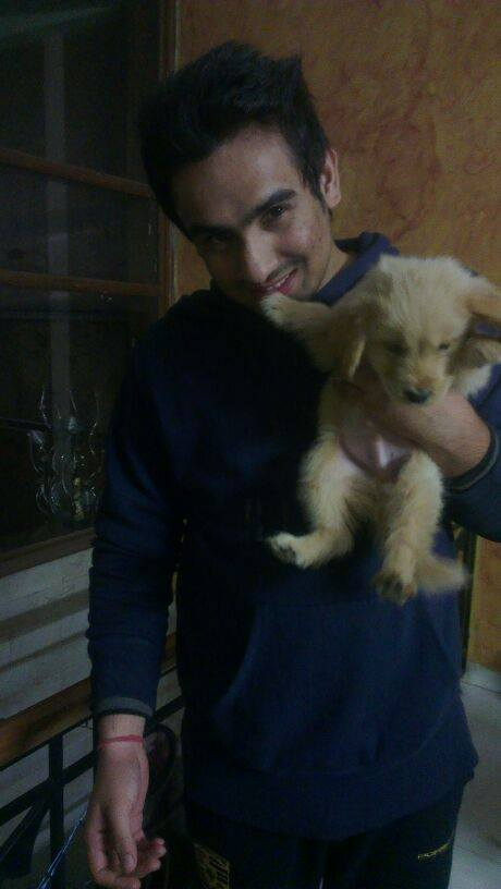 golden retriever dogs puppies for sale india