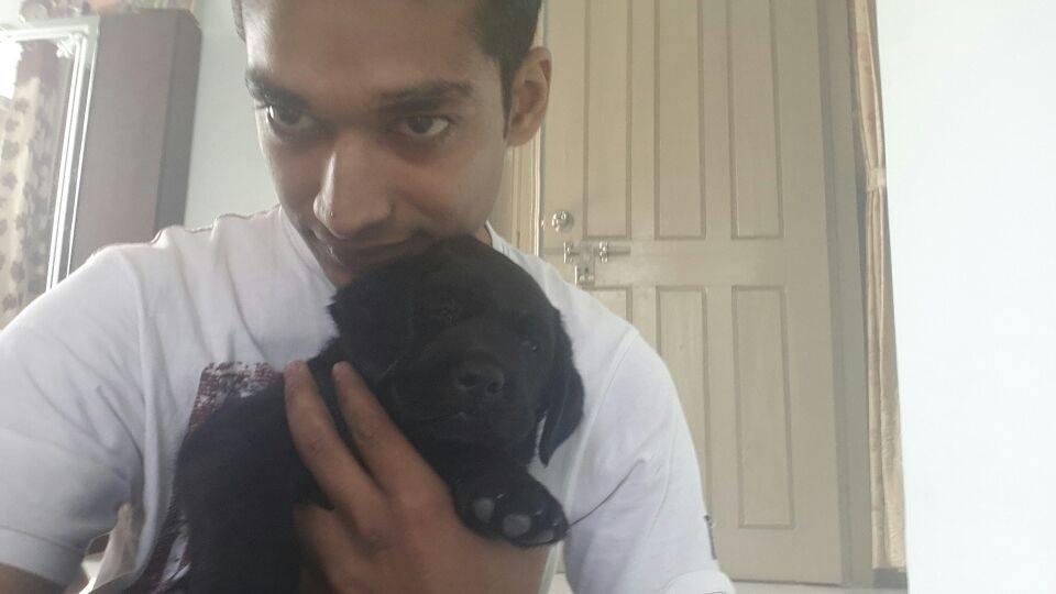 black labrador retriever dogs puppies for sale