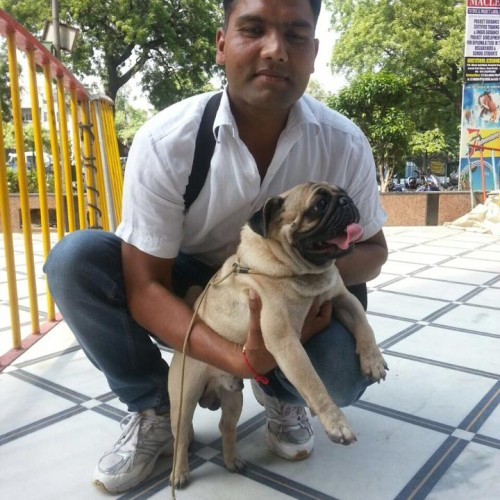 pug puppies for sale in delhi
