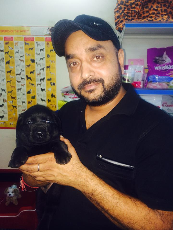 black labrador dogs puppies for sale