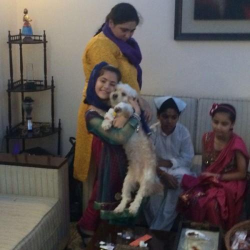 havanese puppies for sale in mumbai