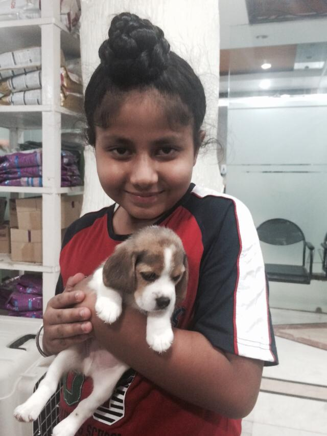 beagle puppies for sale in ahmedabad
