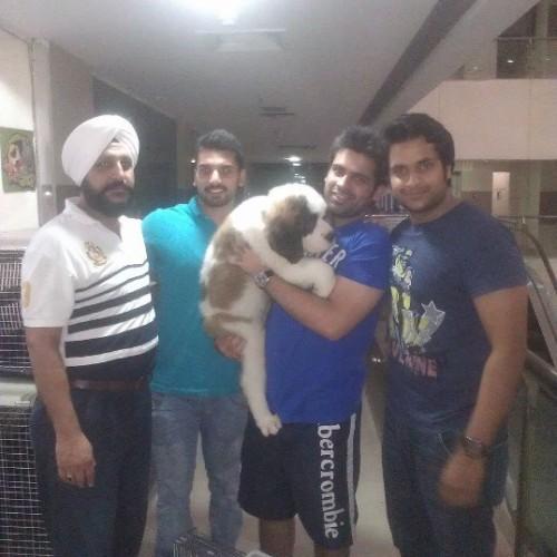 saint bernard puppies for sale in delhi