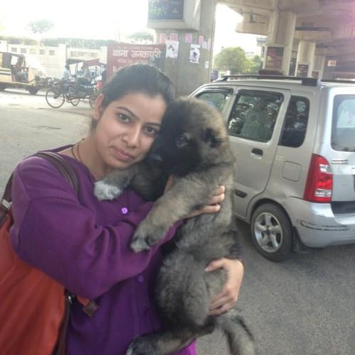 caucasian shepherd puppies for sale in delhi