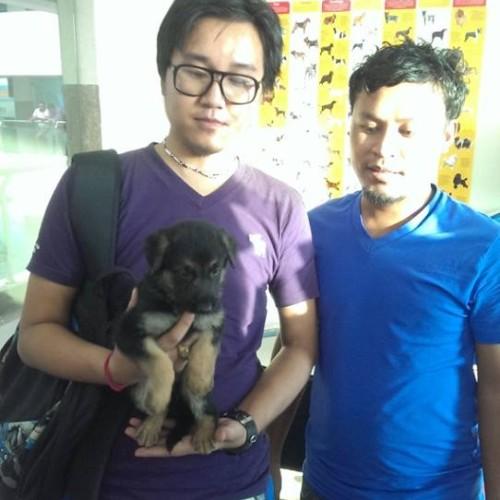 german shepherd puppies for sale in gurgaon