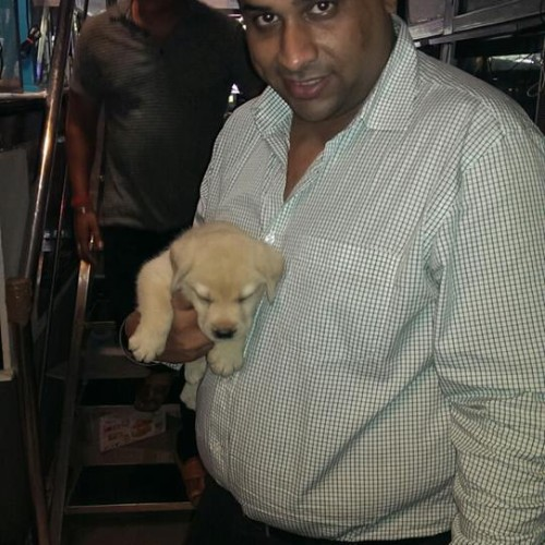 labrador puppies for sale in gurgaon