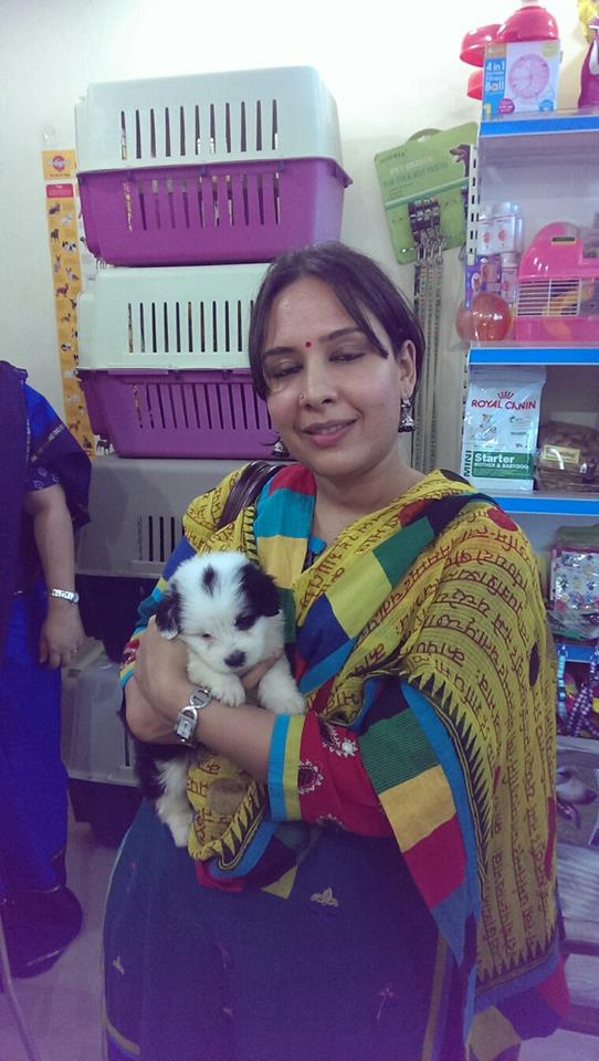 Havanese Puppies For Sale In Gurgaon
