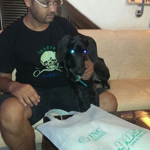 black great dane puppies for sale in gurgaon
