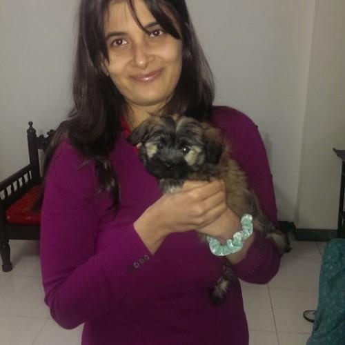 coton de tulear puppies for sale in gurgaon