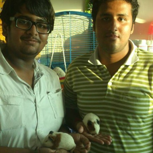 guinea pig for sale in delhi