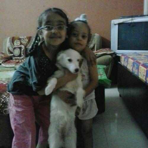 american eskimo puppies for sale in delhi