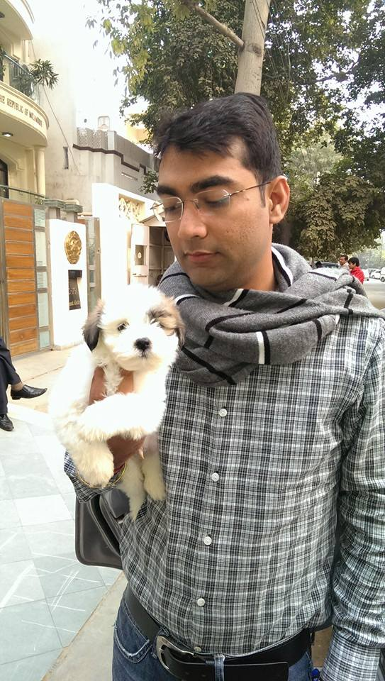 havanese puppies for sale in delhi ncr