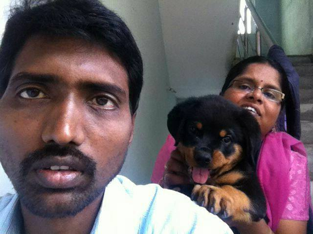 rottweiler male puppies for sale in mumbai