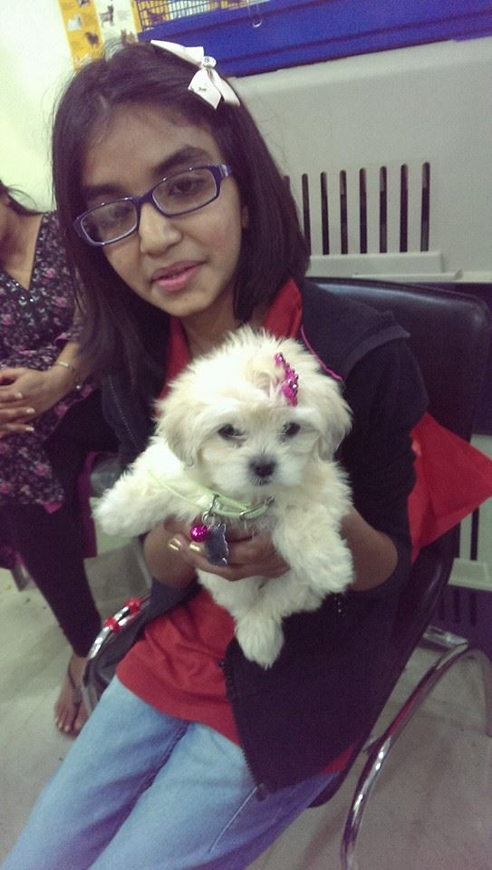 Maltipoo puppies for sale in delhi ncr