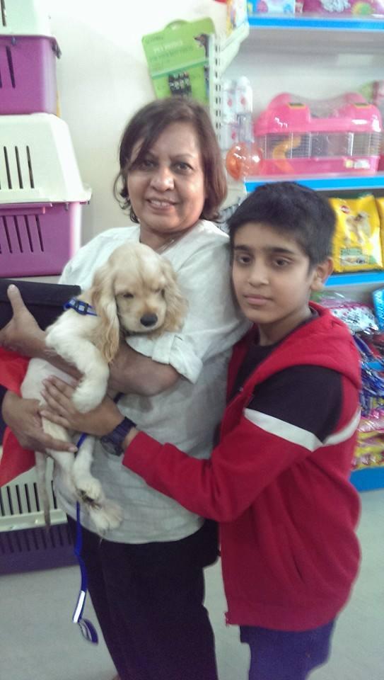 golden americn cocker spaniel puppies for sale in delhi ncr