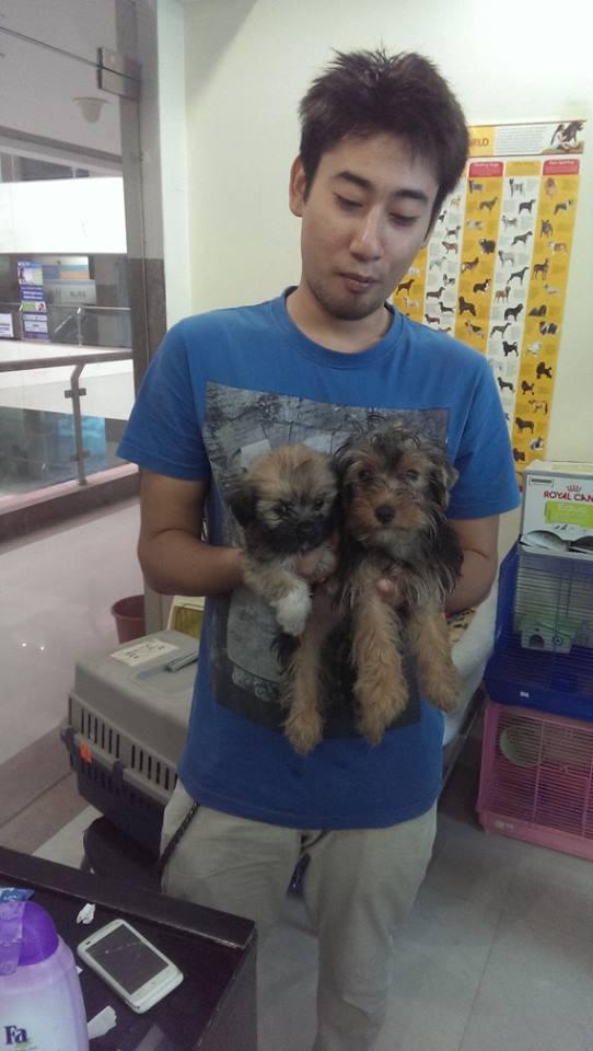 golden cavapoo puppies for sale in delhi ncr