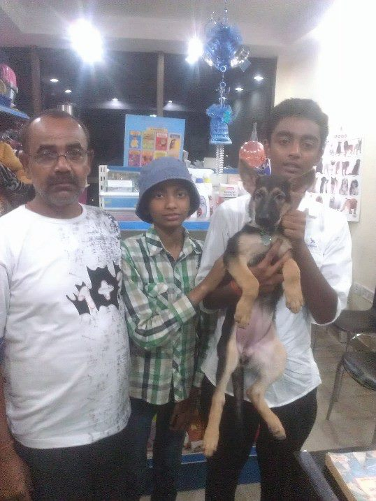 Alsation puppies for sale in delhi ncr
