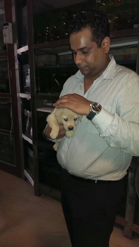 american lab puppies for sale in delhi ncr