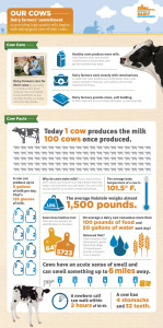 Our-Cows-Infographic